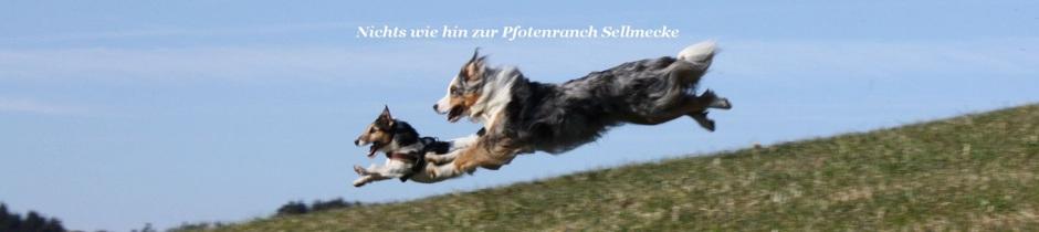 Pfotenranch Sellmecke - Hundepension & Hundeschule